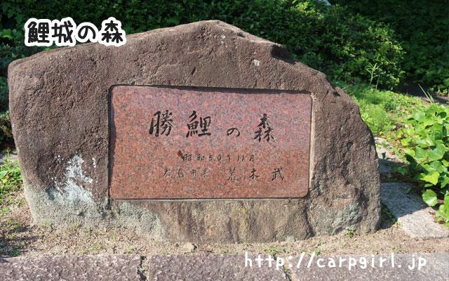 広島市 鯉城の森 カープ