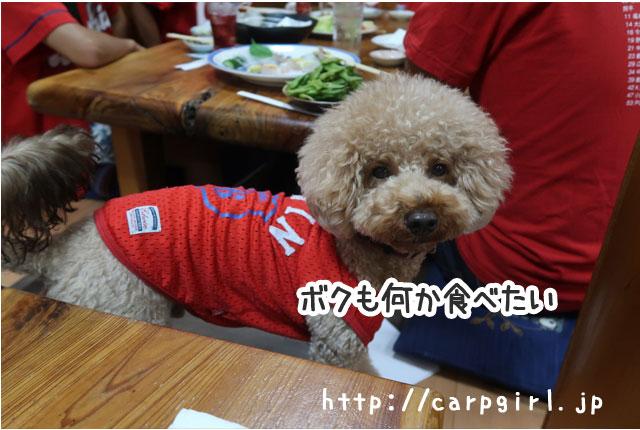 カープ 犬