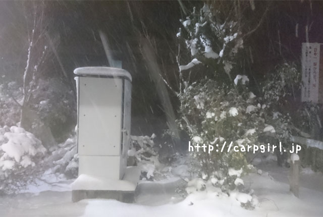 愛媛 大雪