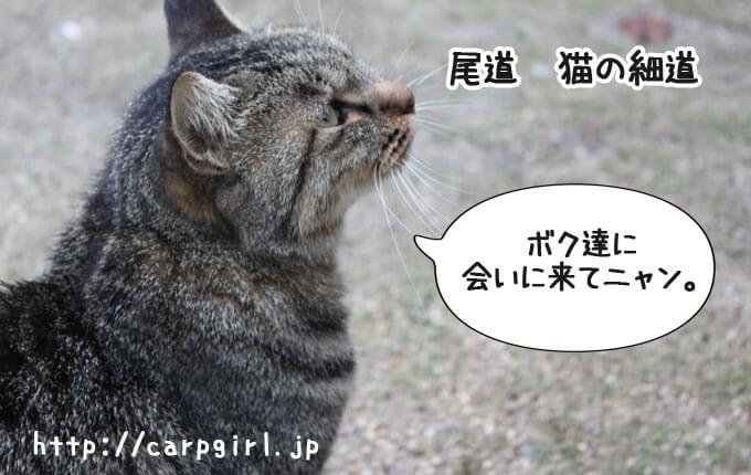 猫の細道とは