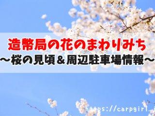広島造幣局の花のまわりみち
