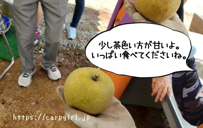 大豊農園 おいしい梨の見分け方
