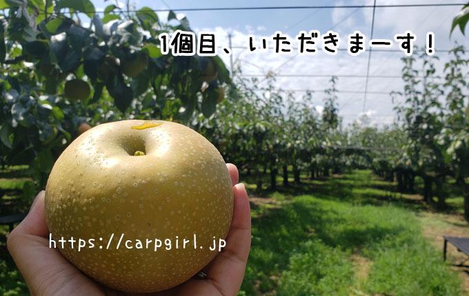 大豊農園で梨狩り